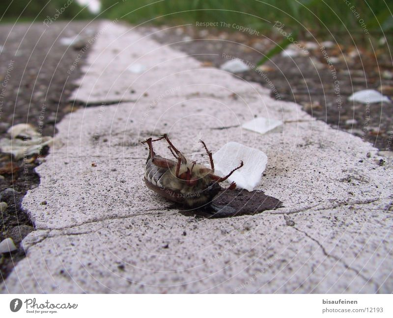Animal Street Death Lanes & trails Insect Stripe Poison Beetle Kill Blossom leave May bug