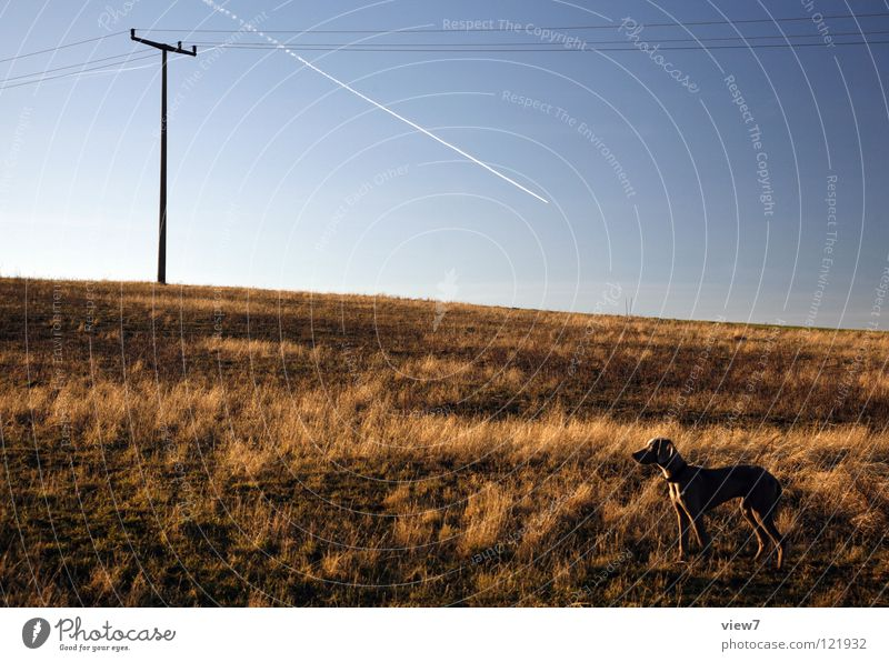 Nature Beautiful Sky Blue Winter Loneliness Gray Dog Brown Field Small Airplane Large Horizon Empty Electricity