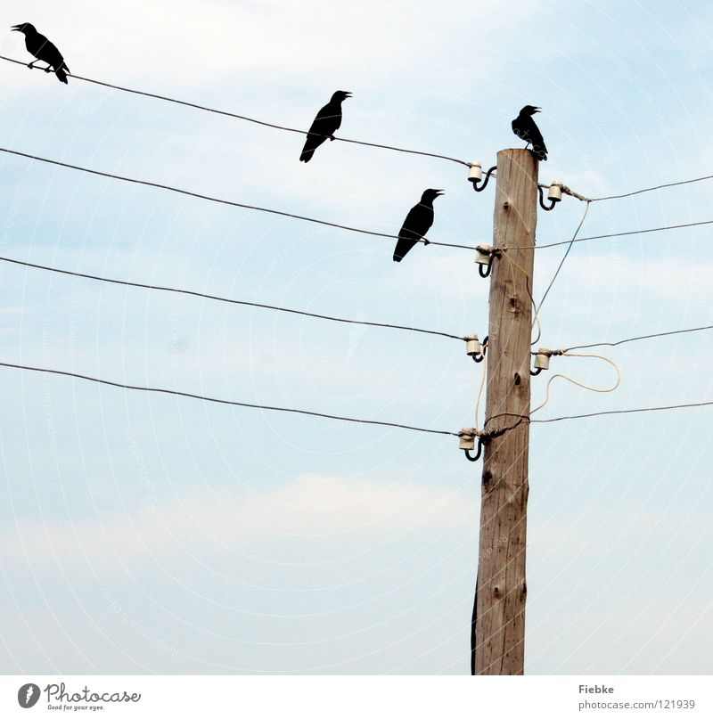 Bad luck? Bird Black 4 Crow Crash Raven birds Jinx Electricity pylon Old Transmission lines Wood Beak Open Direct Claw Silhouette Sky Blue Bright Feather Grief