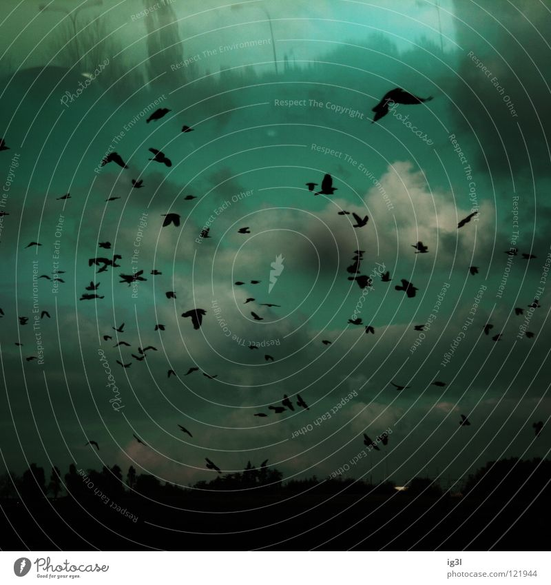 Sky Beautiful Black Landscape Think Dream Bird Flying Exceptional Forest Future Change Communicate Transience Protection Escape