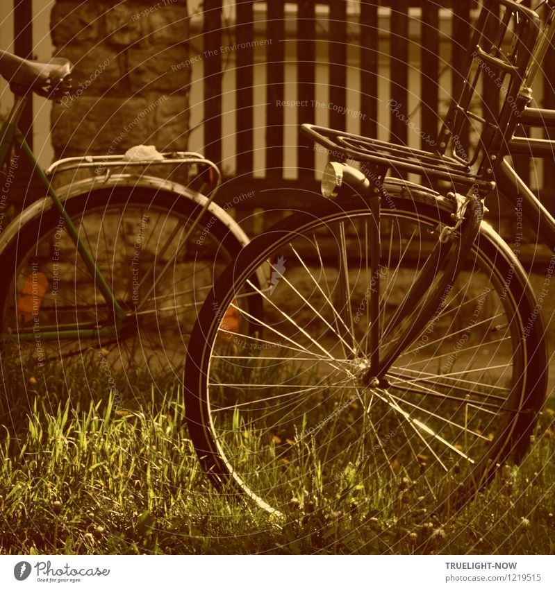 Bicycle nostalgia Lifestyle Style Design Joy Athletic Well-being Relaxation Calm Leisure and hobbies Cycling Freedom Summer Outskirts Garden fence Old Esthetic