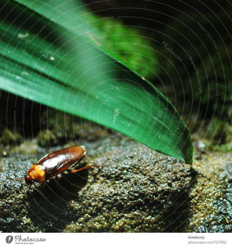 Nature Green Animal Agriculture Living thing Insect Beetle Pests Plagues