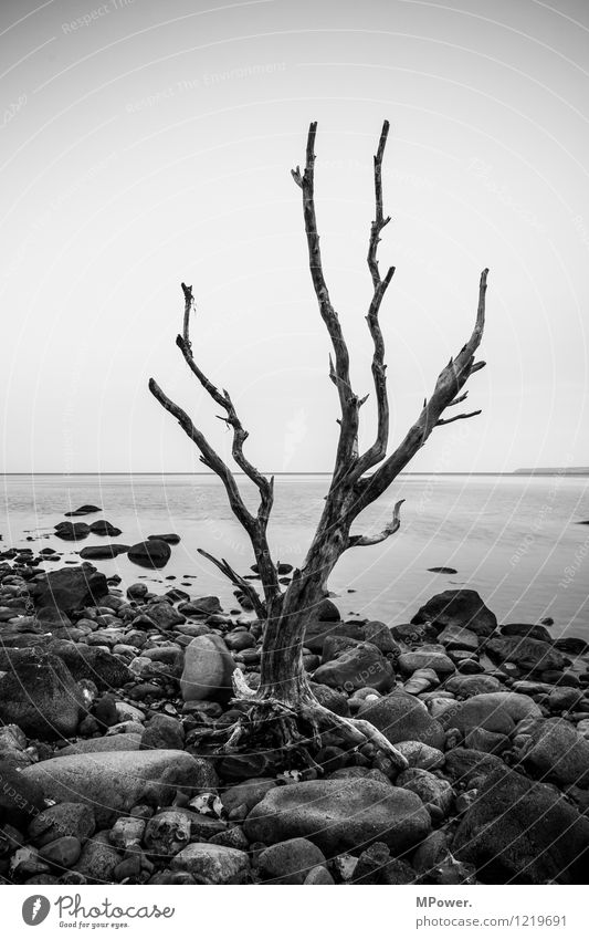alone at kaparkon Environment Nature Water Old Tree trunk Driftwood Coast Cap Arcona Rügen Horizon Stony Stone Calm Gloomy Sparse Shriveled Landscape painting