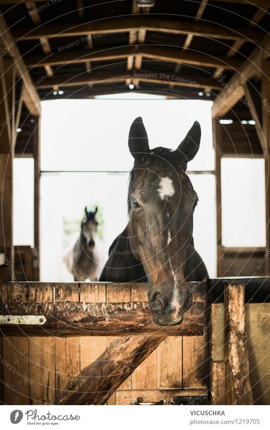 Keeping horses in open stables in a manner appropriate to their species Lifestyle Summer Nature Village Gate Building Wall (barrier) Wall (building) Window Door