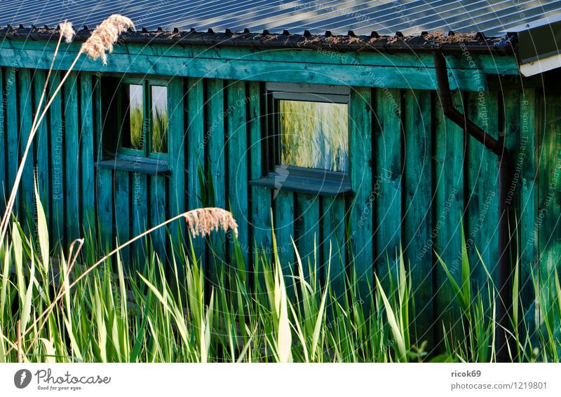 Detail of a boathouse House (Residential Structure) Nature Landscape Plant Coast Lakeside Roof Wood Blue Green Krakow at the lake Mecklenburg-Western Pomerania