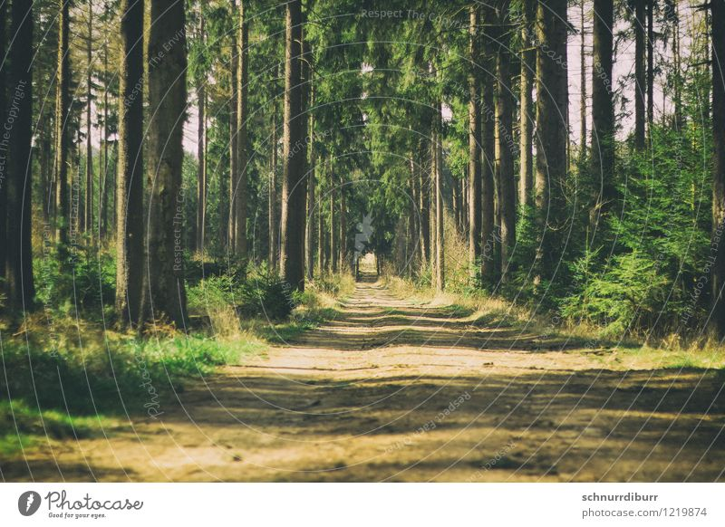 Nature Plant Summer Sun Tree Relaxation Landscape Calm Forest Lanes & trails Wood Illuminate Hiking Trip Observe Cycling