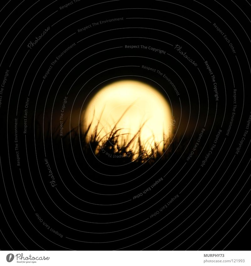 The grass in the moon Grass Night sky Silhouette Night shot Yellow White Black Celestial bodies and the universe Moon Sky moon disk bright disc Shadow