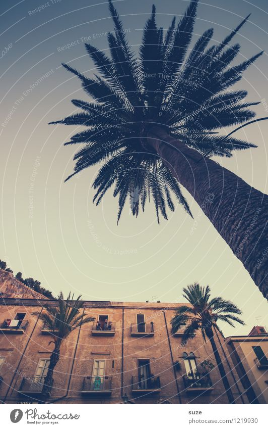 Respected palm tree Vacation & Travel Tourism City trip Culture Town Old town House (Residential Structure) Places Manmade structures Building Architecture