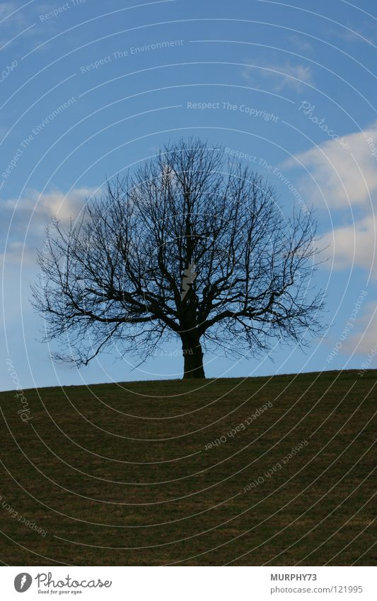 Sky White Tree Green Blue Winter Black Clouds Meadow Grass Branch Transience Branchage Lime tree