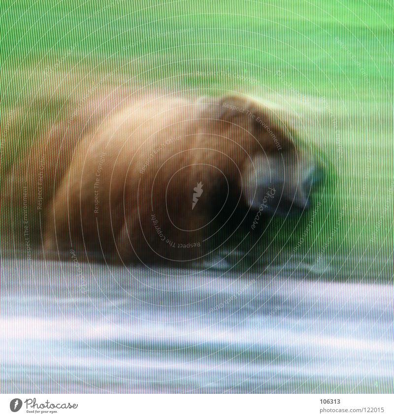 BEAR Bear Wild animal Wilderness Nature Brown bear Green Meadow Grass Water Lake River Hunter Land-based carnivore Dangerous Pelt Snout Grizzly Hunting Pixel