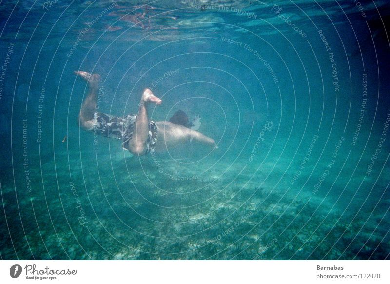 Feeding time II Underwater photo Ocean Snorkeling Lomography shark Water sea fish diving marinarium