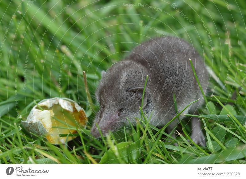 Nature Green Animal Meadow Grass Eating Happy Small Gray Fresh Wild animal Sit Point Cute Curiosity Delicious