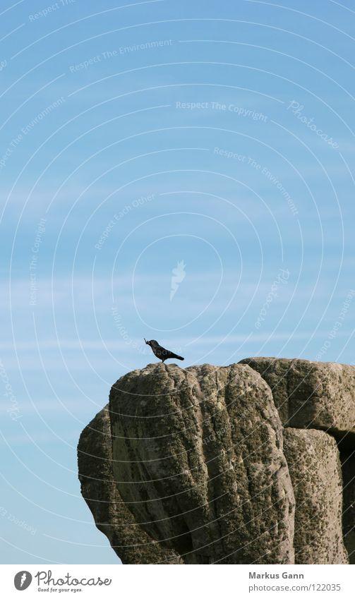 Sky Blue Loneliness Above Gray Stone Air Bird Wait Rock Tall Sit Vantage point Stand Twig Blackbird