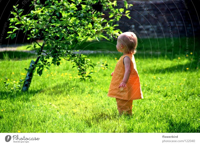 Child Tree Sun Summer Loneliness Garden Search Cute Toddler Nature