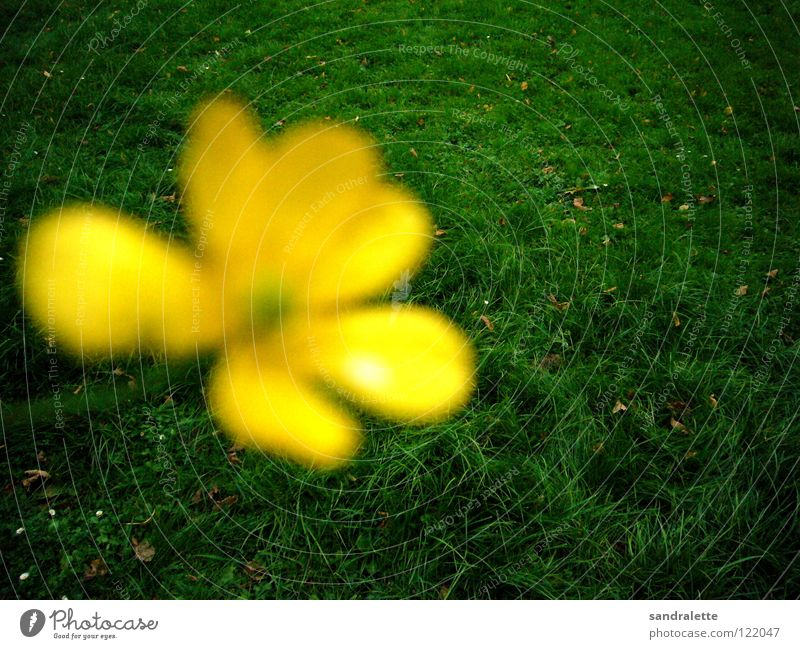 Green Summer Yellow Meadow Grass Park Background picture Lawn Forwards Concentrate Dandelion Backwards Summer's day Foreground
