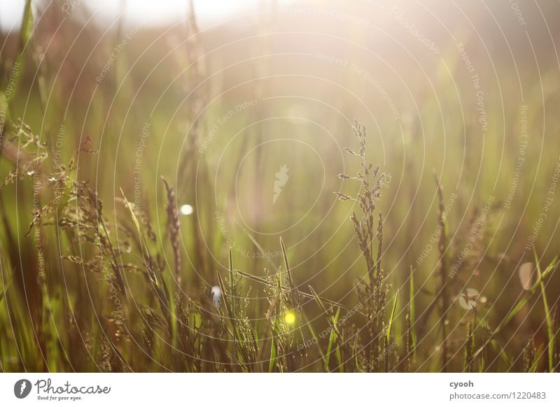 lush June meadows Nature Landscape Summer Beautiful weather Plant Grass Meadow Growth Fresh Hot Bright Juicy Green Contentment Energy Freedom Serene Idyll