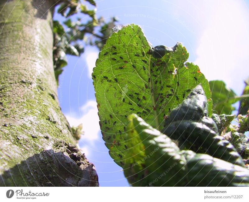 Tree Leaf Tree trunk Tree bark Pests Parasite Isopod