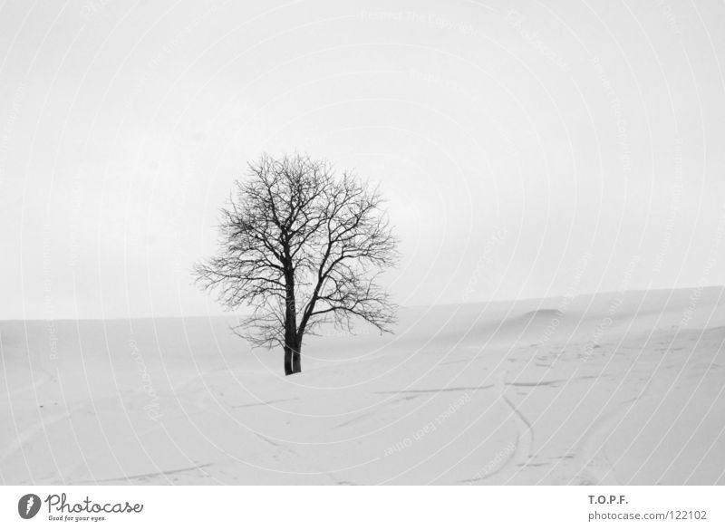 Lonesome Tree Winter White Cold Loneliness Snow Snowscape Calm Black & white photo loner melancholically