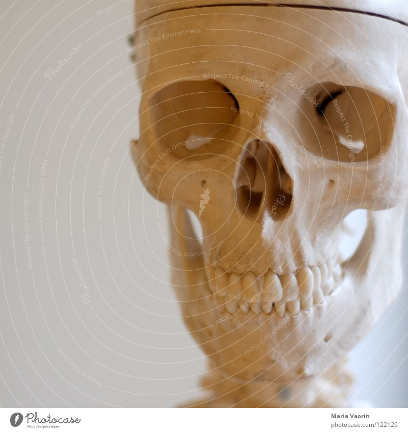 cranium Skeleton Disastrous Creepy Horror film Fear Hallowe'en Biology Science & Research Death's head Teeth Head Partially visible Detail Section of image