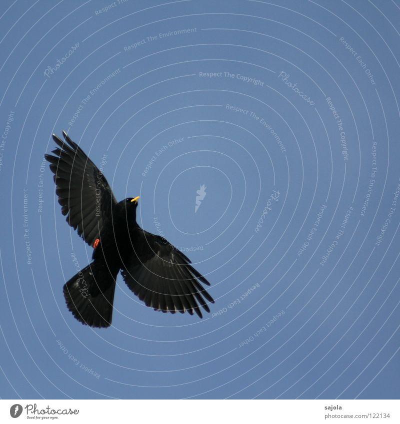 Sky Blue Red Black Animal Yellow Freedom Bird Flying Animal face Feather Wing Switzerland Mobility Beak
