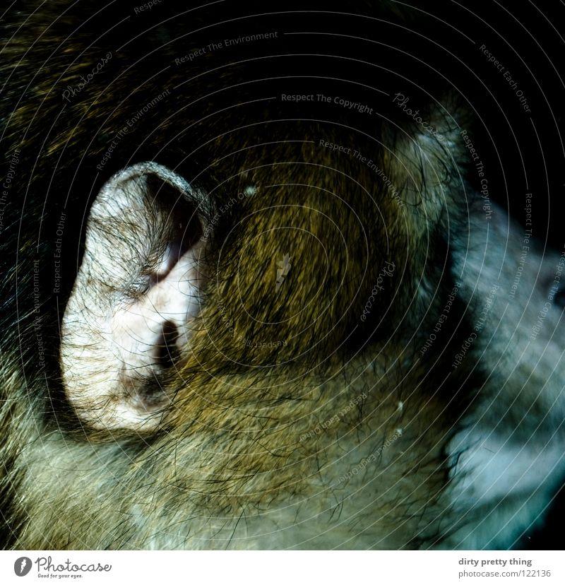 Animal Ear Near Zoo Listening Mammal Monkeys