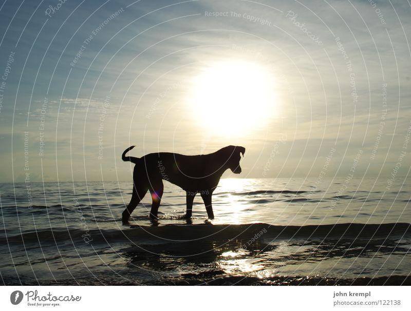 Water Sun Ocean Beach Vacation & Travel Dog Coast Hiking Walking Island To go for a walk Asia Swimming & Bathing Mammal Dusk Thailand