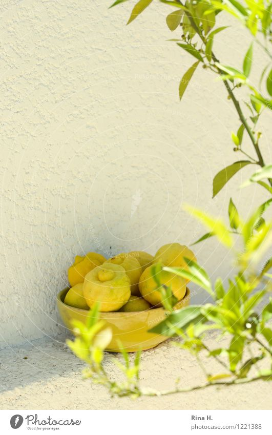 vitamin bombs Fruit Citrus fruits Lemon Bowl Plant Tree Leaf Wall (barrier) Wall (building) Sour Exterior shot Deserted Sunlight Shallow depth of field