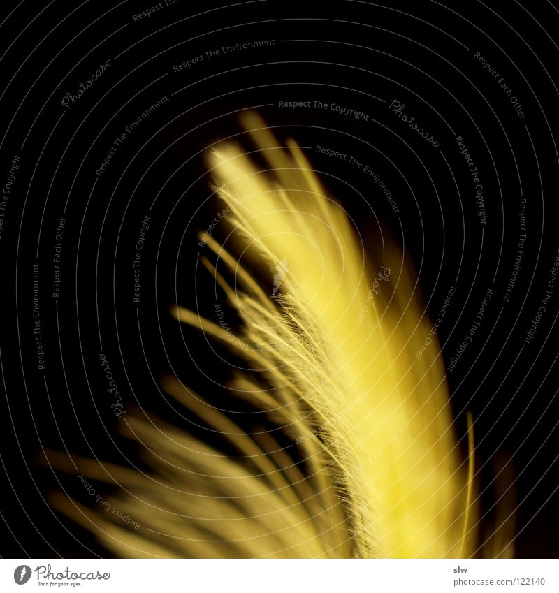 Fire Feather Yellow Black Soft Neon light Tiny hair Macro (Extreme close-up) Close-up Lamp Blaze Flame