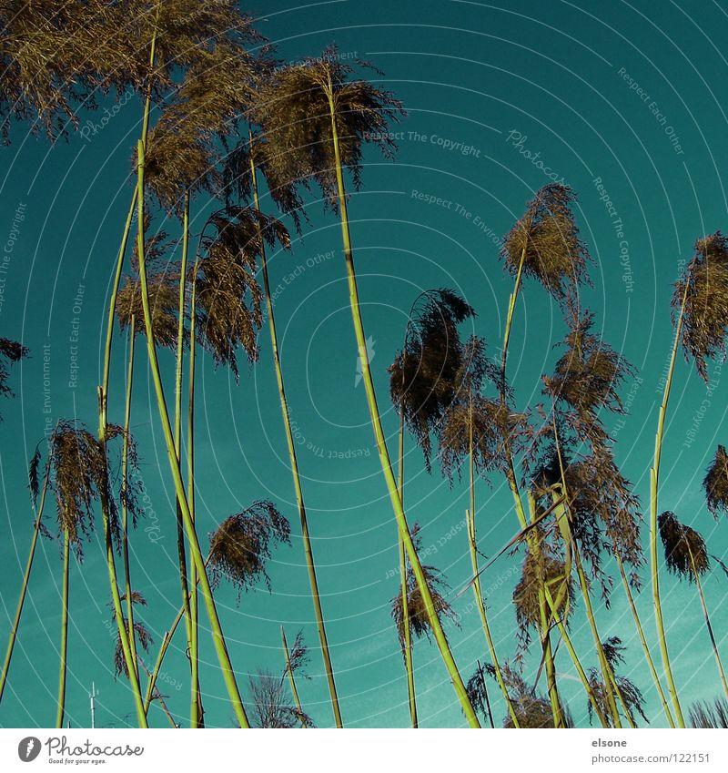 Nature Sky Grass River Stalk Palm tree