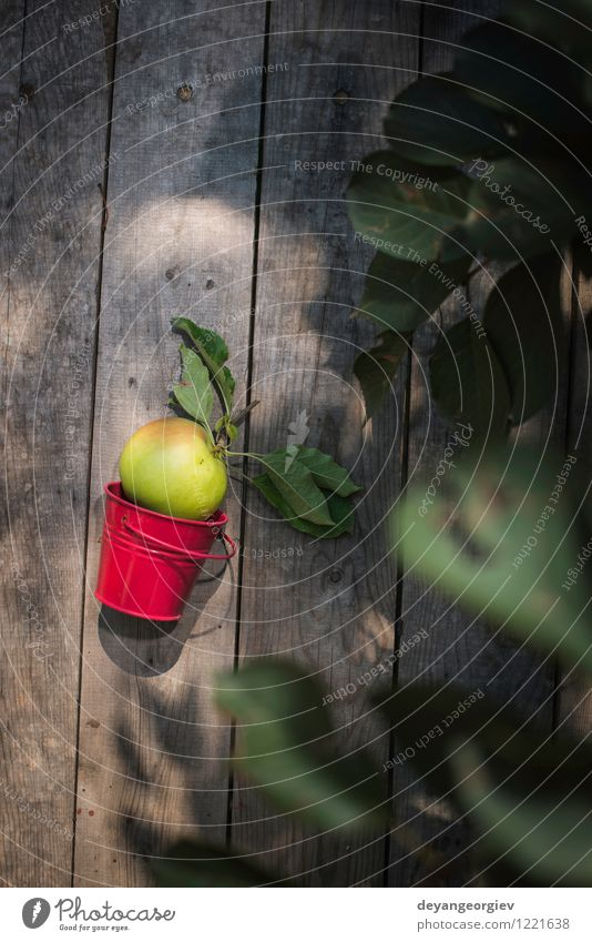 Apple on wooden floor Fruit Diet Summer Garden Gardening Nature Plant Autumn Tree Leaf Growth Fresh Delicious Natural Juicy Green Red Colour branch Organic