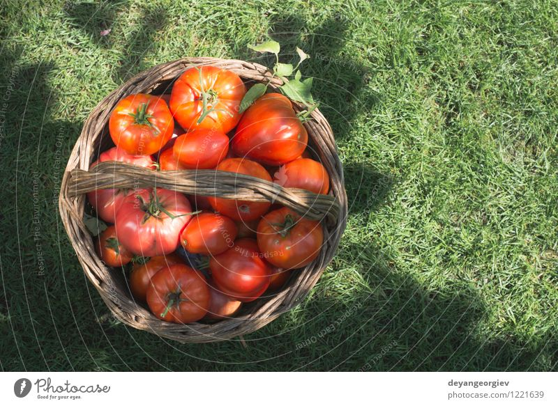 Tomatoes in wooden basket on green meadow Nature Plant Green Summer Sun Red Leaf Natural Eating Garden Group Fruit Fresh Large Vegetable Harvest