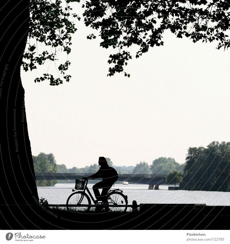 Münster Natives Bicycle Woman Leisure and hobbies Leaf Tree Lake Dark Spokes Fence Summer Weekend Bridge pier Contrast Lake Aa Tree trunk Water bicycle basket