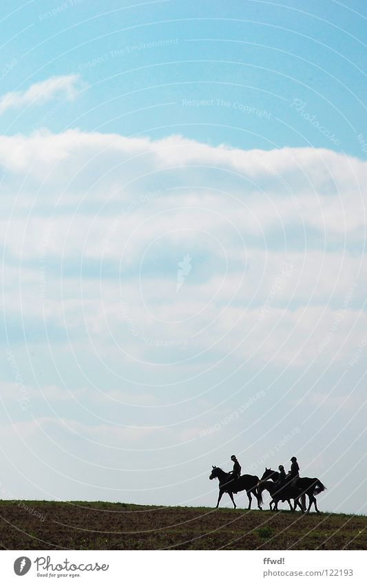 ride on! Horse Ride Walking Trip Clouds Field Silhouette Sky Equestrian sports Rider Blue Nature