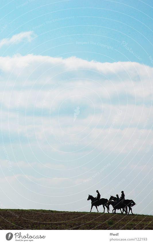 Sky Nature Blue Clouds Field Walking Trip Horse Equestrian sports Rider Ride