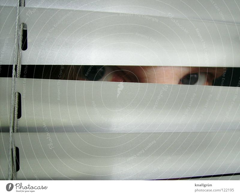 hide and seek Search Venetian blinds Hide Looking Disk Silver Bright blue eyes Reflection