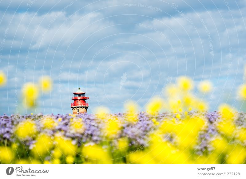 island colours Environment Landscape Plant Sky Horizon Summer Beautiful weather Blossom Agricultural crop Canola bee friend Field Blue Multicoloured Yellow