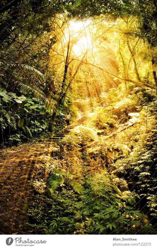 a morning in the jungle Virgin forest Forest Light Sunlight Sunbeam Taiwan sun sunbeams rainforest Lighting ray rays