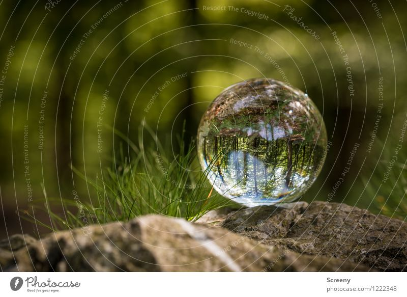 Worlds #10 Nature Landscape Plant Spring Summer Beautiful weather Tree Grass Bushes Forest Eifel High venn Glass ball Crystal ball Stone Round Brown Green Calm