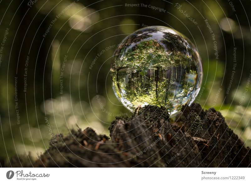 Worlds #9 Nature Landscape Plant Spring Summer Beautiful weather Tree Bushes Forest Eifel High Venn Crystal ball Glass ball Wood Round Brown Green Calm Idyll
