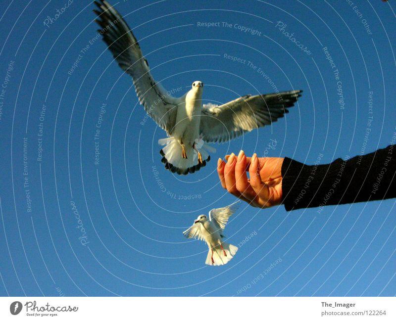 Woman Vacation & Travel Hand Ocean Beach Relaxation Feminine Coast Bird Nutrition Fingers Wing Baltic Sea Seagull Beak Feeding