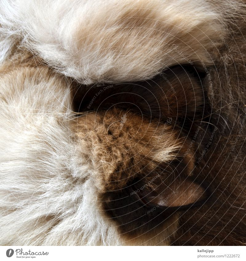 cat from bird's eye view Animal Pet Cat Pelt 1 Sleep Domestic cat Ear Coat color Hair and hairstyles Calm Convoluted Colour photo Subdued colour Light Shadow