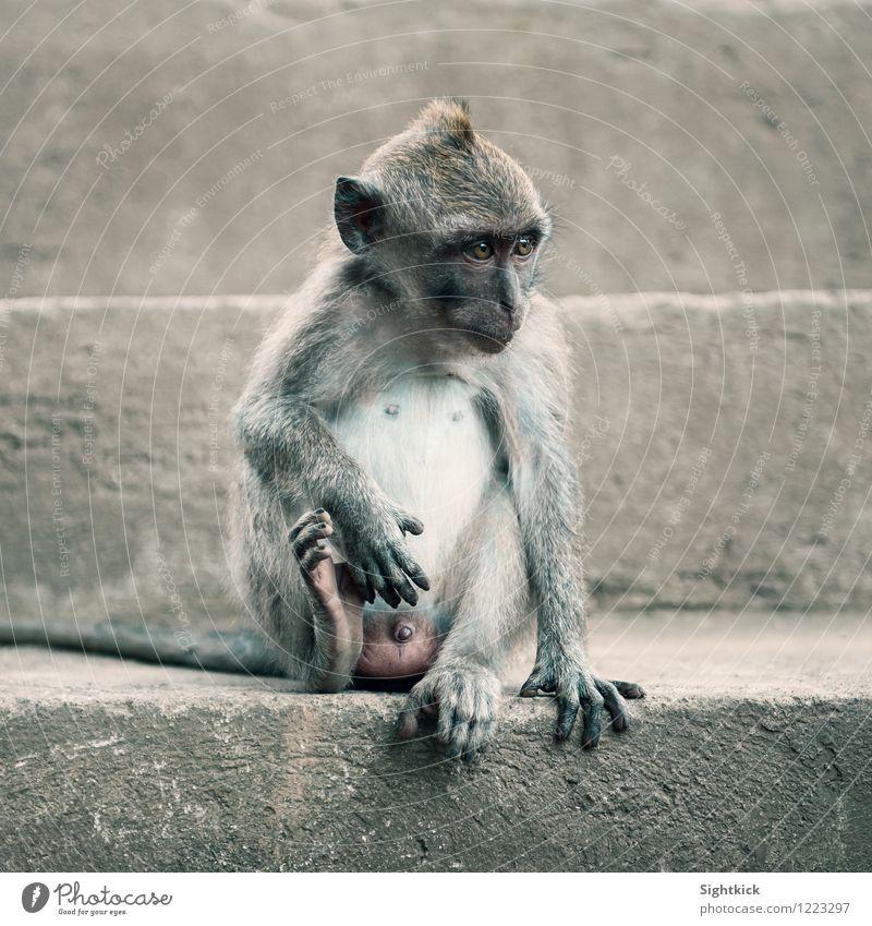 Little Mojo Animal Animal face 1 Stone Concrete Cute Gray Vacation & Travel Environment Monkeys Colour photo Exterior shot Day Animal portrait