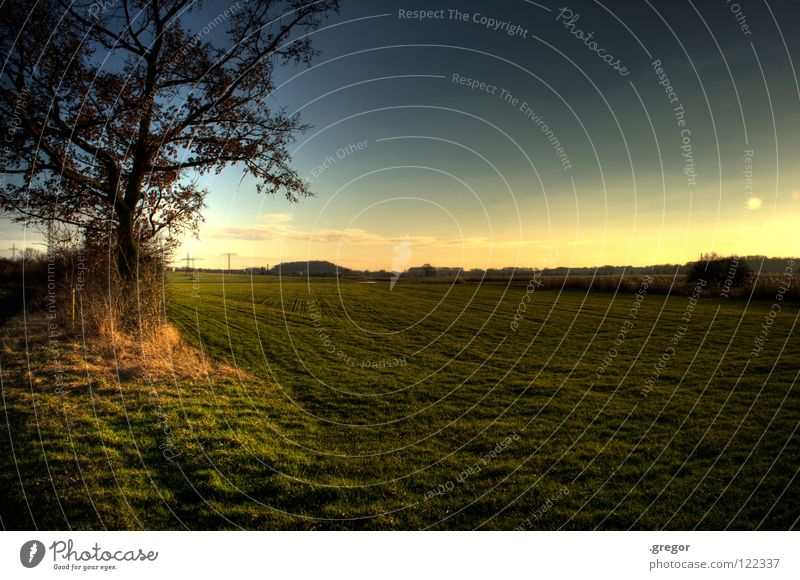 Sky Tree Calm Far-off places Meadow Lanes & trails Horizon Earth Field Clarity Agriculture Peace Concentrate Pasture Americas