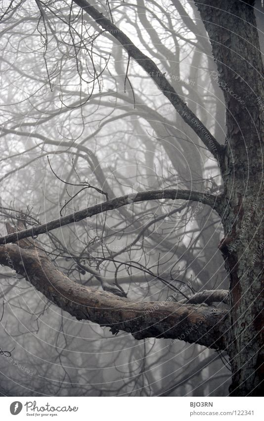 Nature Tree Winter Loneliness Forest Dark Cold Sadness Fog Wet Frost Creepy Frozen Damp Twig