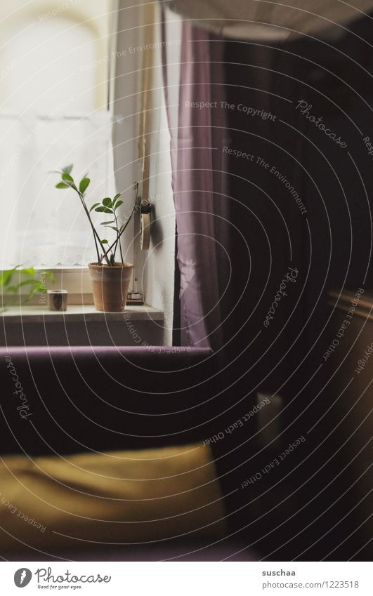 at home. Living or residing Room Flat (apartment) Window Houseplant Drape Dark Sadness