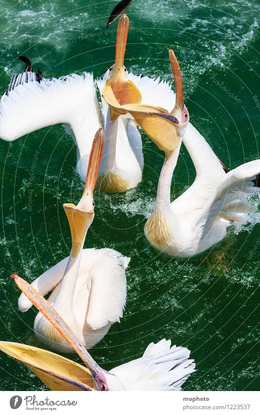 Nature Water Ocean Animal Environment Movement Eating Bird Wild animal Wing Wet Group of animals Fish Fish Appetite Catch