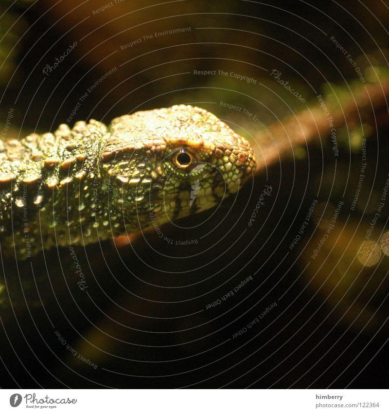 Animal Zoo Exotic Camouflage Saurians Armor-plated Lizards Iguana Newt