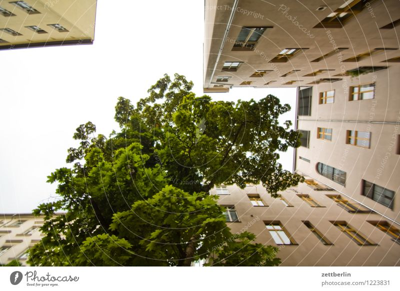Sky Nature City Summer Tree House (Residential Structure) Window Berlin Facade City life Copy Space Apartment Building Capital city Tower block Story