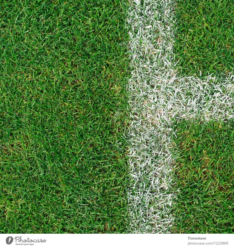 Beyond the lines. Sports Football pitch Grass Signs and labeling Line Esthetic Clean Green White Considerable Lawn Colour photo Exterior shot Deserted Day