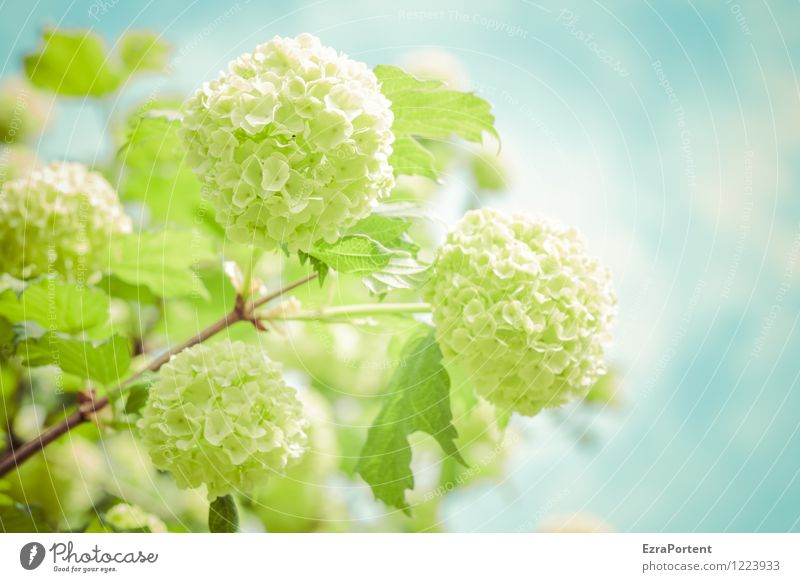 Sky Nature Blue Plant Green Summer Leaf Spring Blossom Garden Bright Weather Bushes Esthetic Climate Blossoming